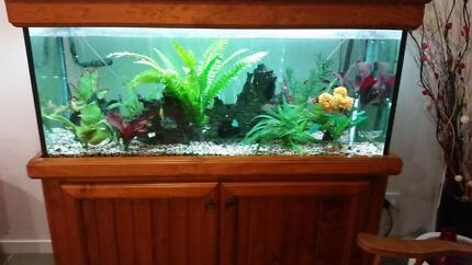4FT  Fish tank and accessories Burpengary Caboolture Area Preview