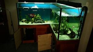 Custom fish tank Newnham Launceston Area Preview