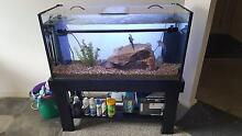 3ft. indoor fresh water tropical fish tank PACKAGE DEAL! East Maitland Maitland Area Preview