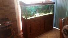 URGENT SALE LARGE FISH TANK AND STAND Adelaide Hills Preview