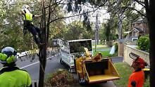 Tree Removal | Tree Pruning | Austral Oaks Tree Services Sydney Sydney City Inner Sydney Preview