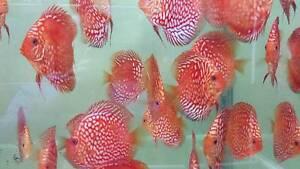 AquaticFish.com.au Kogarah Rockdale Area Preview