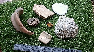 Ancient Yorks. Site finds mixed pottery from 9th C and nice Oyster shells L56i