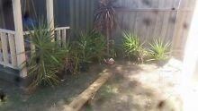 Plants for sale - Yukkas Cranbourne Casey Area Preview