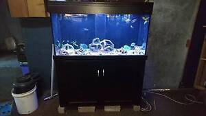 Aqua One 400ltr 4ft reef tank. Burpengary Caboolture Area Preview