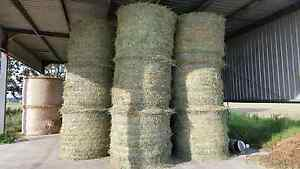 For Sale Round Bales Of Hay For Horses Just Cut Maitland Maitland Area Preview