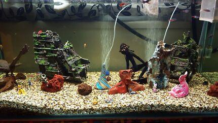 Lotsa fish dating