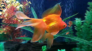 aquariums/ supplies/ fish/ filters and more!!