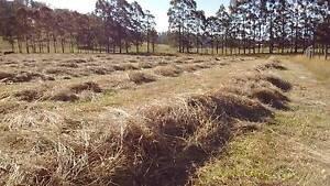 Grass Hay, Small Squares Bridgenorth West Tamar Preview