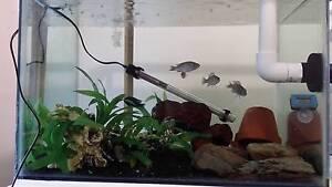 Aquarium fish Tanks, Pumps and Accessroies Fluval Aquaone Brisbane City Brisbane North West Preview