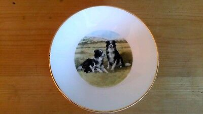 - Highland China Border Collie Pin Dish, Perfect Condition