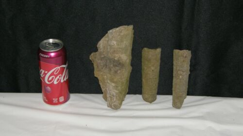 Lot Of 3 Orthocone Naultiloid Cephalopod Fossil Sections Middle Tennessee