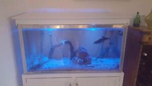 Multiple Fish Tanks Green Point Gosford Area Preview