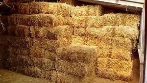 Lucerne hay for sale. Rocky Cape Circular Head Preview
