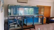 FISH TANK 10ft x 3ft x 3ft full setup Hurstville Hurstville Area Preview