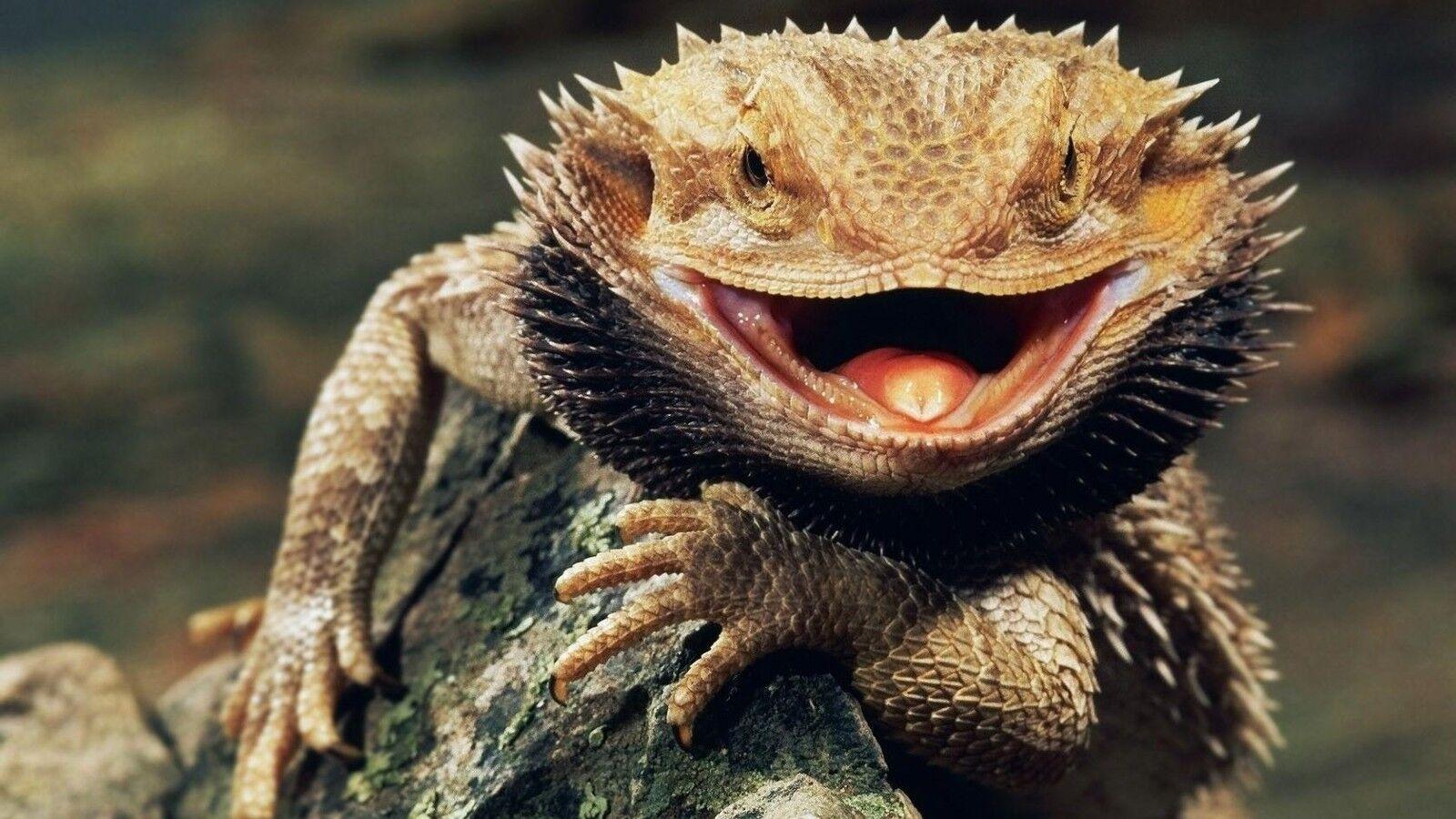 lucky-lizard2016