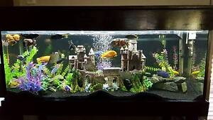 4ft Refurbished Timber Fish Tank Aquarium, decor, light and Care Calamvale Brisbane South West Preview