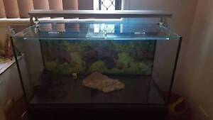 Turtle/fish tank Morayfield Caboolture Area Preview