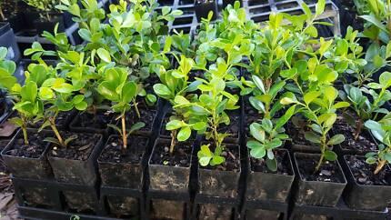 Cheap Plants $2.00 Tubes