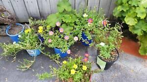 lots of flowering Plants