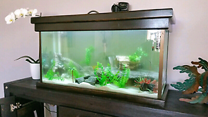 Fish Tank heater external filter tropical aquarium led custom Byford Serpentine Area Preview