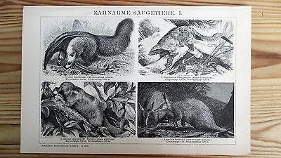 Bild, Druck, Antiquität, Säugetiere, Ameisenbär, Erdferkel, Tiere, Gürteltier