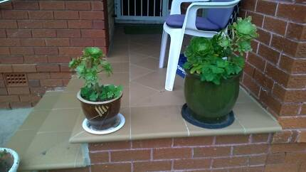 Garden pot plant holders big 2x (plants not included) 1.Brown med Miranda Sutherland Area Preview