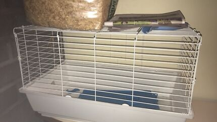 Wanted: 2 Guinea Pigs & 2 Cages