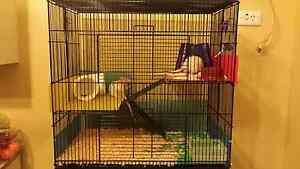 Pet Rats Male Pair with set up Para Hills Salisbury Area Preview