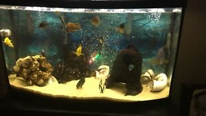 45 Gallon bowfront fish tank!! CHEAP!! Must go!