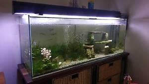 4 foot aquarium tank Rivervale Belmont Area Preview