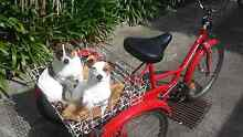 GOMIER 5 Speed Adult Tricycle Seaford Frankston Area Preview