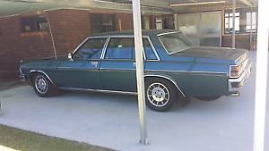 WB Statesman deville Stanthorpe Southern Downs Preview