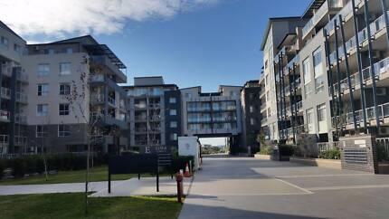 Homebush West/ Morden Lift Apartment / Single bedroom for rent