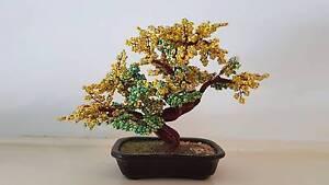 Beautiful Miniture Golden Shower tree Blackburn Whitehorse Area Preview