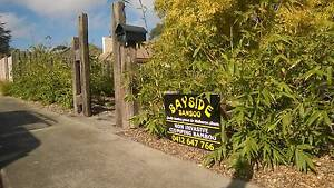 Clumping Boo for screening & ornamental .  Lots on Sale Frankston South Frankston Area Preview