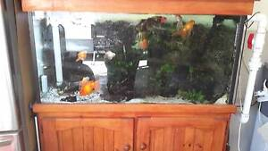 4' fish tank East Branxton Cessnock Area Preview