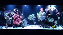 Marine aquarium setup see description sold as package or separate Amaroo Gungahlin Area Preview