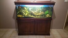 4ft fish tank , complete set up and fish Bligh Park Hawkesbury Area Preview