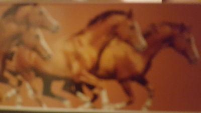Amy's Tack 4 horses9
