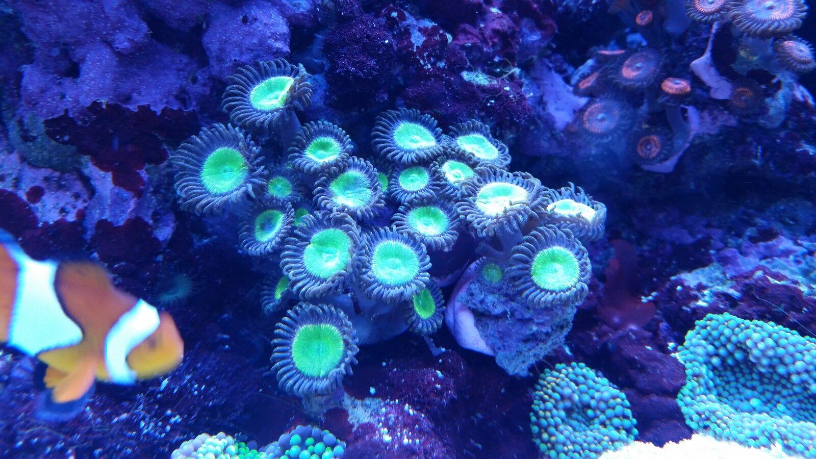 reefer,s aquarium