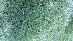 Synthetic Turf / Lawn / Grass for SALES! Hampstead Gardens Port Adelaide Area Preview