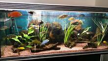 aqua one aquarium for sale Gawler Gawler Area Preview