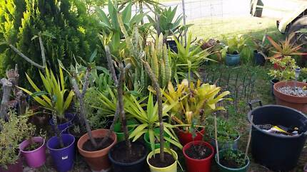 Everyday plant's for sale...