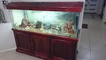 6x2x2 aquarium setup Condell Park Bankstown Area Preview