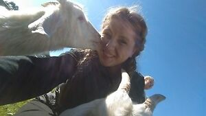 Dog walking/basic training, pet sitting Sunbury Hume Area Preview