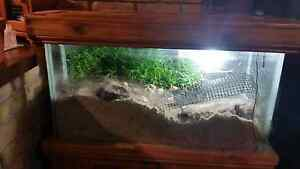 HERMIT CRAB TANK with stand .$450.00 Lyndoch Barossa Area Preview