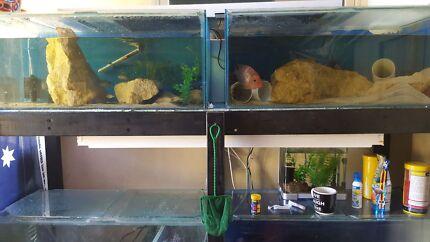 Breeding Boxes For Sale Breeding Setup For Sale