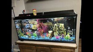 55gal tank with everything in it