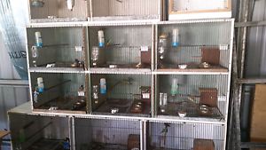 Entire breeding set up with gouldians included. Cordalba Bundaberg Surrounds Preview